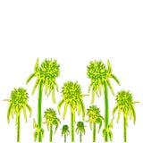 Το λουλούδι του αγκαθιού είναι όπως έναν σκαντζόχοιρο Διανυσματική απεικόνιση