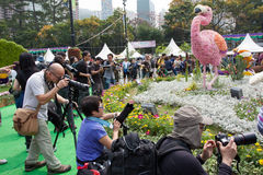 Το λουλούδι Χονγκ Κονγκ παρουσιάζει στοκ φωτογραφίες