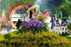 Το λουλούδι Χονγκ Κονγκ παρουσιάζει στοκ εικόνες