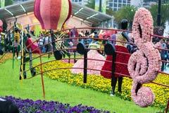 Το λουλούδι Χονγκ Κονγκ παρουσιάζει στοκ εικόνα