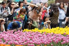 Το λουλούδι Χονγκ Κονγκ παρουσιάζει στοκ εικόνα με δικαίωμα ελεύθερης χρήσης