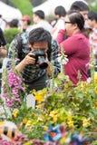 Το λουλούδι Χονγκ Κονγκ παρουσιάζει στοκ φωτογραφίες με δικαίωμα ελεύθερης χρήσης
