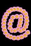 Το λουλούδι χρυσάνθεμων έχει τη μορφή arobase στο μαύρο υπόβαθρο Στοκ φωτογραφία με δικαίωμα ελεύθερης χρήσης