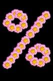 Το λουλούδι χρυσάνθεμων έχει το σύμβολο της μορφής τοις εκατό Στοκ εικόνες με δικαίωμα ελεύθερης χρήσης