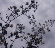 Το λουλούδι χλόης στοκ εικόνες με δικαίωμα ελεύθερης χρήσης