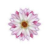 Το λουλούδι Lotus απομόνωσε το άσπρο υπόβαθρο Στοκ φωτογραφία με δικαίωμα ελεύθερης χρήσης