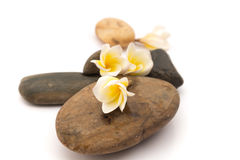 Το λουλούδι Plumeria ή frangipani στην πέτρα για τη SPA χαλαρώνει, εκλεκτική εστίαση Στοκ εικόνα με δικαίωμα ελεύθερης χρήσης