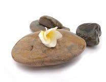 Το λουλούδι Plumeria στην πέτρα για τη SPA χαλαρώνει, τροπική ροή frangipani Στοκ Εικόνες