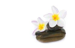 Το λουλούδι Plumeria στην πέτρα για τη SPA χαλαρώνει Στοκ Εικόνες