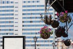Το δοχείο λουλουδιών με τα πορφυρά λουλούδια κρεμά στην οδό Στοκ Εικόνες