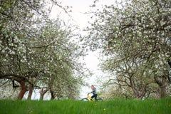 Το οδηγώντας ποδήλατο μικρών παιδιών καλλιεργεί την άνοιξη στοκ φωτογραφία
