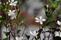 Το πάρκο έχει πολλά όμορφα δέντρα και λουλούδια στοκ φωτογραφίες