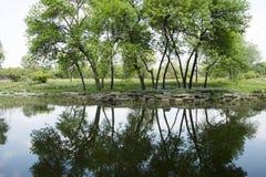 Το πάρκο, αντανάκλαση στο νερό τα δέντρα και δέντρα Στοκ Εικόνα
