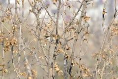 Το πάρκο για να λάβει τις διαφορετικές μορφές Songbird Στοκ εικόνες με δικαίωμα ελεύθερης χρήσης