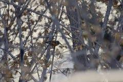 Το πάρκο για να λάβει τις διαφορετικές μορφές Songbird Στοκ εικόνα με δικαίωμα ελεύθερης χρήσης