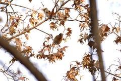 Το πάρκο για να λάβει τις διαφορετικές μορφές Songbird Στοκ Εικόνες