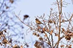 Το πάρκο για να λάβει τις διαφορετικές μορφές Songbird Στοκ φωτογραφίες με δικαίωμα ελεύθερης χρήσης