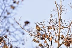 Το πάρκο για να λάβει τις διαφορετικές μορφές Songbird Στοκ Εικόνα
