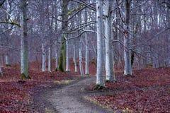 Το πάρκο με τα δέντρα στοκ φωτογραφία με δικαίωμα ελεύθερης χρήσης