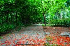 Το πάρκο με το κόκκινο ελατήριο λουλουδιών στο έδαφος Στοκ Εικόνες