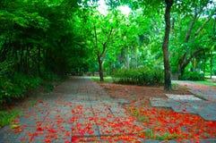 Το πάρκο με το κόκκινο ελατήριο λουλουδιών στο έδαφος Στοκ φωτογραφία με δικαίωμα ελεύθερης χρήσης