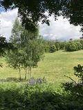 Το πάρκο σύνθετο Στοκ εικόνες με δικαίωμα ελεύθερης χρήσης