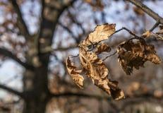 Το πάρκο του Γκρήνουιτς, ξεραίνει τα φύλλα και ένα mishmash των κλάδων Στοκ Φωτογραφίες
