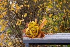 Το πάρκο φθινοπώρου, ανθοδέσμη των τριαντάφυλλων που γίνονται από τα πεσμένα φύλλα σφενδάμου βρίσκεται Στοκ Εικόνες