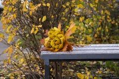 Το πάρκο φθινοπώρου, ανθοδέσμη των τριαντάφυλλων που γίνονται από τα πεσμένα φύλλα σφενδάμου βρίσκεται Στοκ Φωτογραφίες