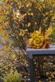 Το πάρκο φθινοπώρου, ανθοδέσμη των τριαντάφυλλων που γίνονται από τα πεσμένα φύλλα σφενδάμου βρίσκεται Στοκ εικόνα με δικαίωμα ελεύθερης χρήσης