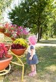 Το παιδί εξετάζει τα λουλούδια Στοκ εικόνα με δικαίωμα ελεύθερης χρήσης