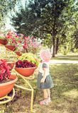 Το παιδί εξετάζει τα λουλούδια Στοκ Εικόνα