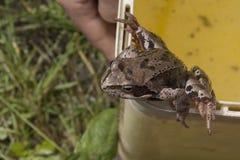 Το παιδί επίασε έναν βάτραχο σε έναν κάδο αλλά προσπαθεί να πηδήσει στοκ φωτογραφίες