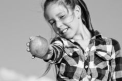 Το παιδί κρατά την ώριμη ηλιόλουστη ημέρα μήλων υγιής διατροφή έννοιας Το παιδί τρώει την ώριμη διατροφή βιταμινών φρούτων συγκομ στοκ εικόνες με δικαίωμα ελεύθερης χρήσης