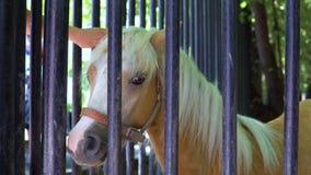 Το παιδί κτυπά το άλογο στο ζωολογικό κήπο απόθεμα βίντεο
