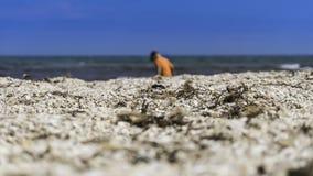 Το παιδί στην παραλία Στοκ φωτογραφίες με δικαίωμα ελεύθερης χρήσης