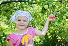 Το παιδί συλλέγει τα μήλα Στοκ φωτογραφία με δικαίωμα ελεύθερης χρήσης
