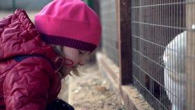 Το παιδί ταΐζει την άσπρη χλόη κουνελιών απόθεμα βίντεο