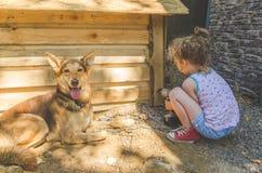 Το παιδί χτίζει το θάλαμο για τα σκυλιά στοκ εικόνες με δικαίωμα ελεύθερης χρήσης