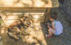 Το παιδί χτίζει το θάλαμο για τα σκυλιά στοκ εικόνα με δικαίωμα ελεύθερης χρήσης