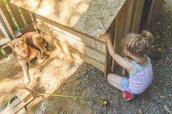Το παιδί χτίζει το θάλαμο για τα σκυλιά στοκ εικόνες