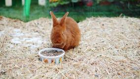 Το παιχνίδι λαγουδάκι Πάσχας, τρώει, στηρίζεται στη μάντρα απόθεμα βίντεο