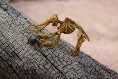 Το παιχνίδι ενός παιδιού Ο σκελετός δεινοσαύρων στο παλαιό δέντρο Στοκ Εικόνες