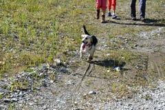 Το παιχνίδι κοριτσιών και η κατάρτιση διατάζουν το σκυλί στοκ εικόνα