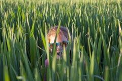 Το παιχνίδι μικρών κοριτσιών δορά-και-επιδιώκει μέσω του πράσινου τομέα δημητριακών στοκ εικόνες με δικαίωμα ελεύθερης χρήσης