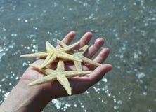 το παιδί κρατά στο χέρι του το μεγάλο αστερία τρία Στοκ Φωτογραφία