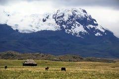 Το παλαιά σπίτι και τα άλογα κάτω από έναν παγετώνα κάλυψαν το ηφαίστειο στην οικολογική επιφύλαξη Antisana, Ecaudor Στοκ Φωτογραφίες
