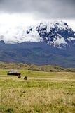 Το παλαιά σπίτι και τα άλογα κάτω από έναν παγετώνα κάλυψαν το ηφαίστειο στην οικολογική επιφύλαξη Antisana, Ecaudor στοκ φωτογραφία με δικαίωμα ελεύθερης χρήσης