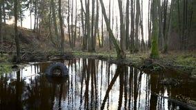 Το παλαιό ελαστικό αυτοκινήτου και άλλα απορρίματα βρίσκονται στη διαποτισμένη όχθη ποταμού, περιβαλλοντική ρύπανση απόθεμα βίντεο