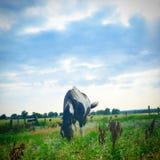 Το πανέμορφο άλογό μου, κοκοφοίνικες στοκ εικόνες